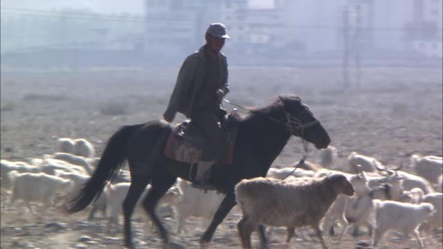 A shepherd rides a horse while herding sheep