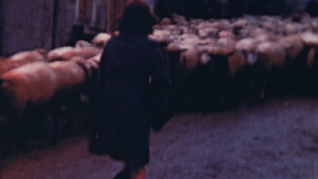 Shepherd sheep dogs and sheep walking through town with a girl passing / Germany