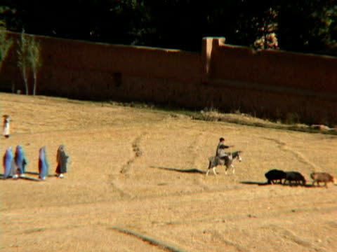 ws ls ha shepherd walking with sheep, women walking behind, bamyan, hazarajat, afghanistan - shepherd stock videos & royalty-free footage