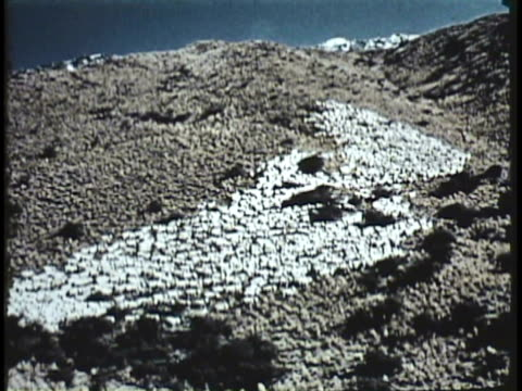 1955 montage ws ha ms cu shepherd watching over sheep grazing in hills, men shearing sheep / new zealand / audio - shepherd stock videos & royalty-free footage