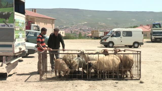 shepherds and their flock, urgup, turkey - herder stock videos & royalty-free footage