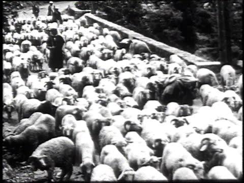 1936 MONTAGE Shepherds lead sheep along road, across field