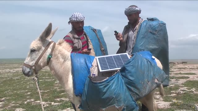 shepherds who live in upland areas in turkey's sanliurfa charge their phones with solar panels which placed on donkeys' back on 24 april 2015 - pferdeartige stock-videos und b-roll-filmmaterial