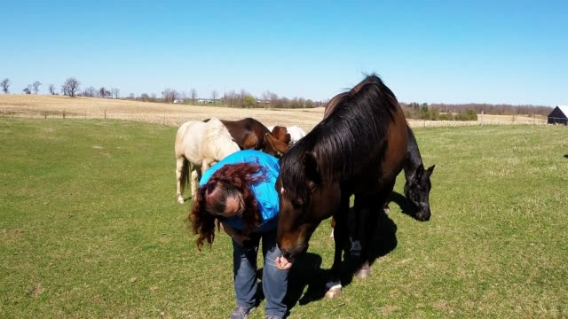 sherrie is a serious animal lover and will take any opportunity to spend time with dogs, cats, or any other animal that she meets. but her love for... - animal ear stock videos & royalty-free footage