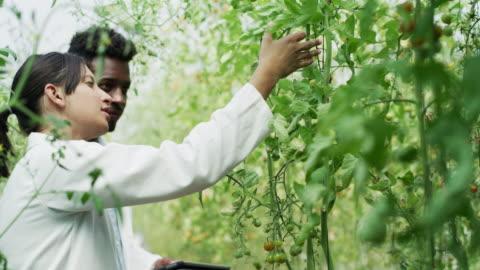 sie verfügt über hervorragende seratorende expertise in der pflanzenwissenschaft - wissenschaft stock-videos und b-roll-filmmaterial