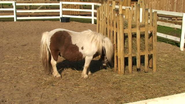 shetland pony - small stock videos & royalty-free footage