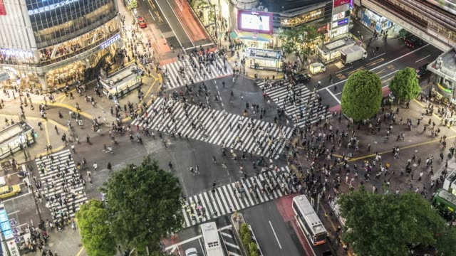 shibuya crossing -aerial view, 4k dci time lapse - zebra crossing stock videos & royalty-free footage
