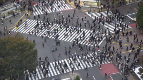 shibuya crossing day time - shibuya crossing stock videos & royalty-free footage