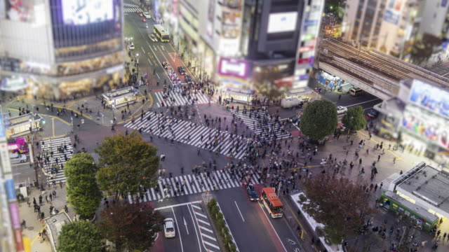 shibuya crossing tilt-shift time lapse - tilt stock videos and b-roll footage