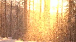 SLOW MOTION Shimmering snow falling on frosty trees in mountain forest at sunset