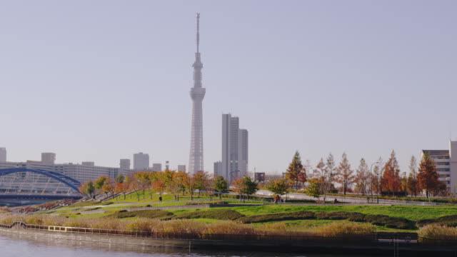 shioiri park and tokyo sky tree in autumn - スカイツリー点の映像素材/bロール
