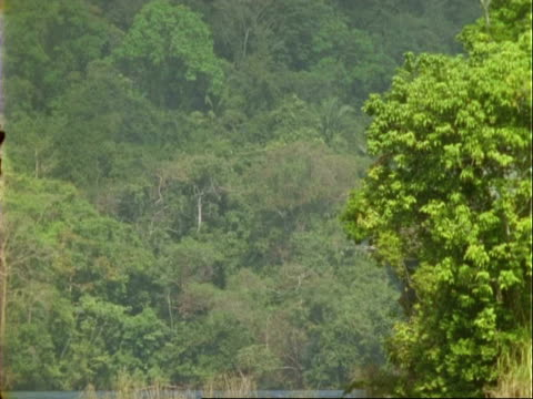 ship enters frame from behind trees, panama canal, panama. - panamakanal stock-videos und b-roll-filmmaterial