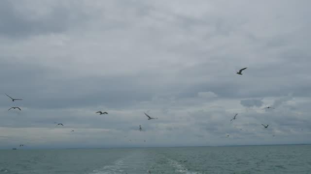 Schip na meeuwen vliegen over schuimend spoor achter de achtersteven van een cruiseschip