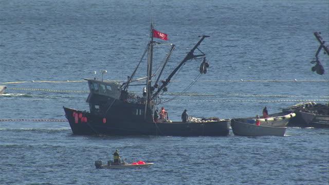 vídeos de stock, filmes e b-roll de ships manoeuvre through the harbour in sitka, alaska. available in hd. - indústria da pesca