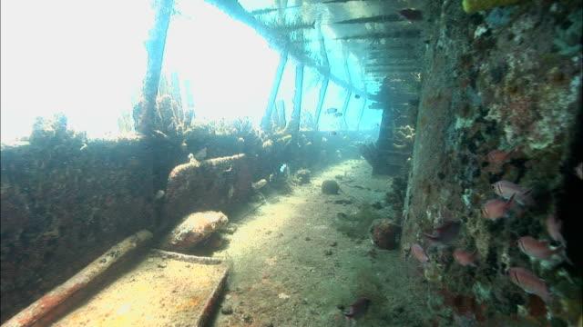 ms, shipwreck covered with corals, saint lucia - イットウダイ点の映像素材/bロール