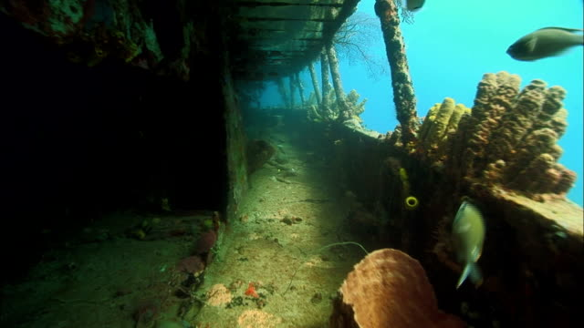 ms, shipwreck covered with corals, saint lucia - meerbarbe stock-videos und b-roll-filmmaterial