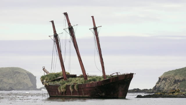 shipwreck in bay of ocean harbor, south georgia island, southern ocean - imperfection stock videos & royalty-free footage