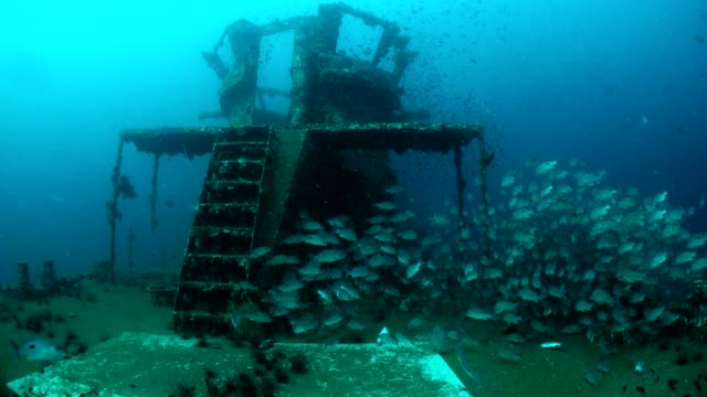 prab shipwreck in chumphon dive site, thailand. - fish stock videos & royalty-free footage