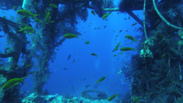 shipwreck  underwater - saltwater fish stock videos & royalty-free footage