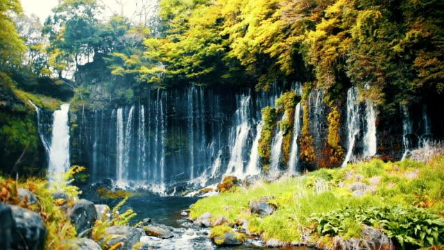 白糸の滝  - 滝点の映像素材/bロール