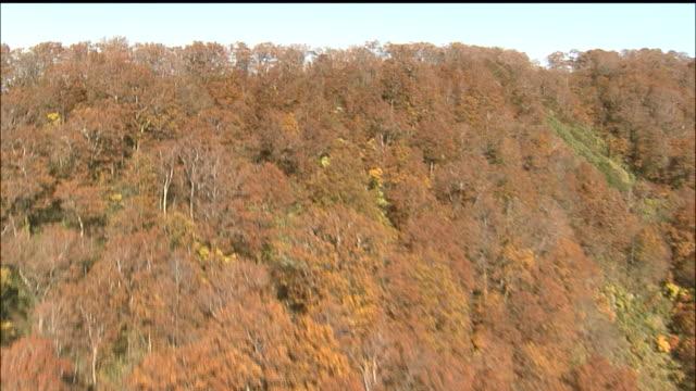 shirakami mountain range virgin beech forest autumn colours aerial shot - 秋田県点の映像素材/bロール