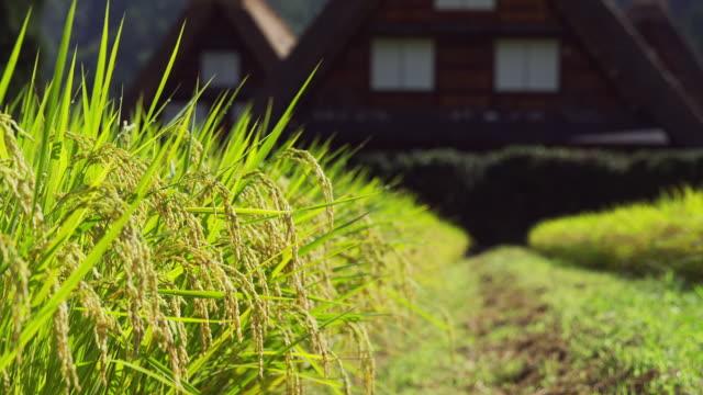 shirakawa-go village - モミ点の映像素材/bロール