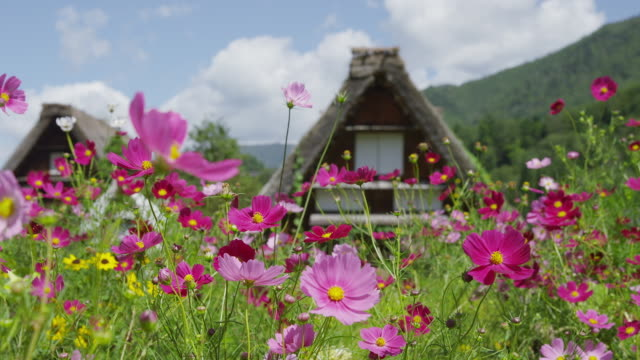 shirakawa-go village - thatched roof stock videos and b-roll footage