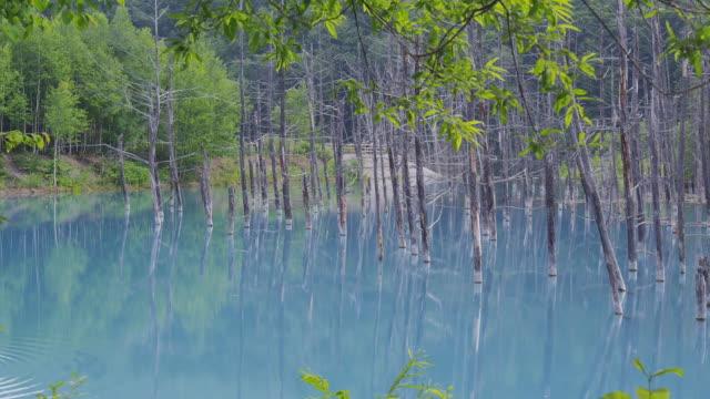 shirogane blue pond in biei, hokkaido, japan - hokkaido stock videos & royalty-free footage