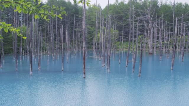 shirogane blue pond in biei, hokkaido, japan - 陸地点の映像素材/bロール