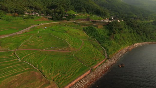 stockvideo's en b-roll-footage met shiroyone senmaida, the most famous rice terrace in japan - rice terrace