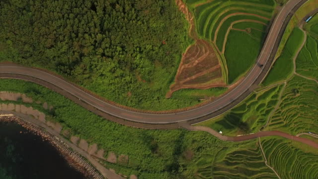 shiroyone senmaida, the most famous rice terrace in japan - 郊外点の映像素材/bロール