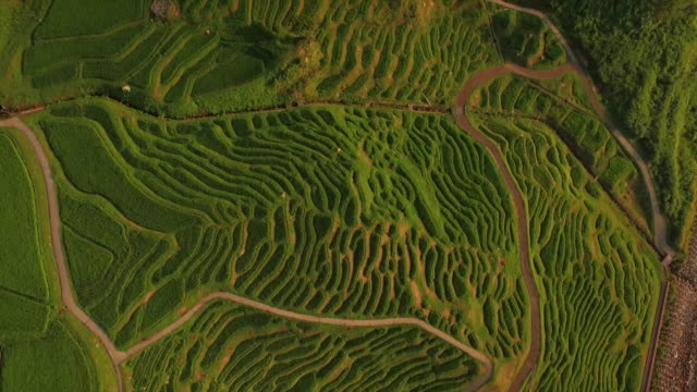 shiroyone senmaida, the most famous rice terrace in japan - rice paddy stock videos and b-roll footage