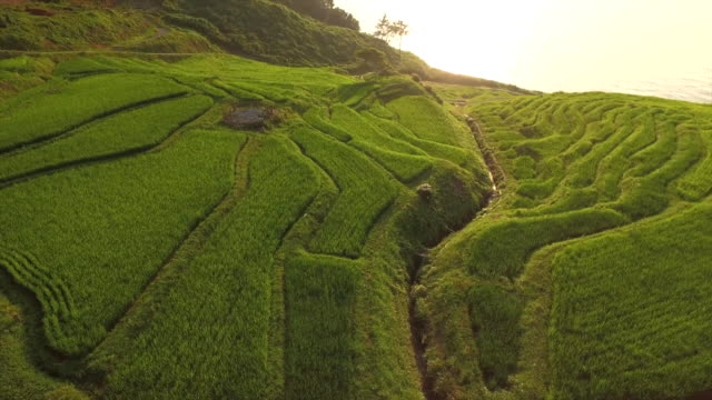 Shiroyone Senmaida, The most famous rice terrace in Japan