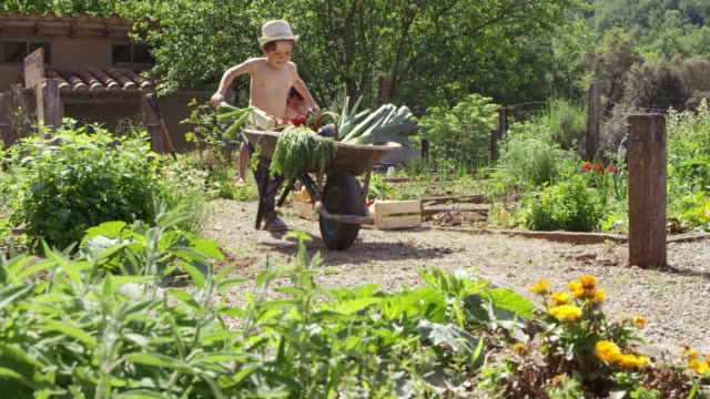 shirtless boy pushing vegetables in wheel barrow - digging stock videos & royalty-free footage
