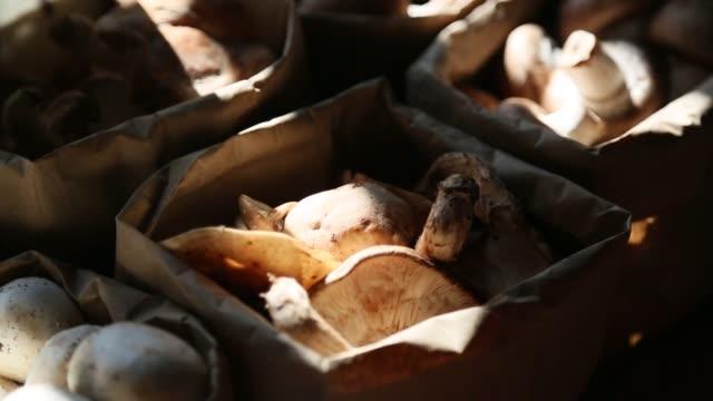 shitaki mushrooms at market close-up - shiitake stock videos & royalty-free footage