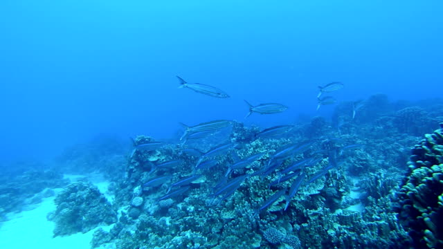 shoal pesce - pesce video stock e b–roll