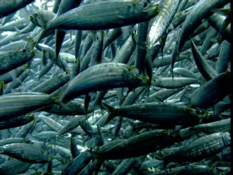 vídeos de stock, filmes e b-roll de shoal of fish, new zealand - símbolo conceitual