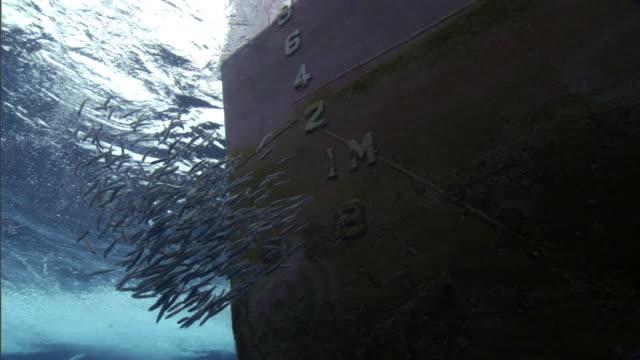 vídeos de stock, filmes e b-roll de shoal of fish shimmers near bow of fishing boat, solomon islands - indústria da pesca