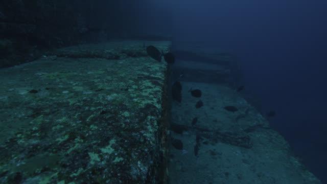 vídeos de stock, filmes e b-roll de shoal of scalpel sawtails (prionurus scalprum) swim over rock ledge of yonaguni monument. japan - grupo médio de animais