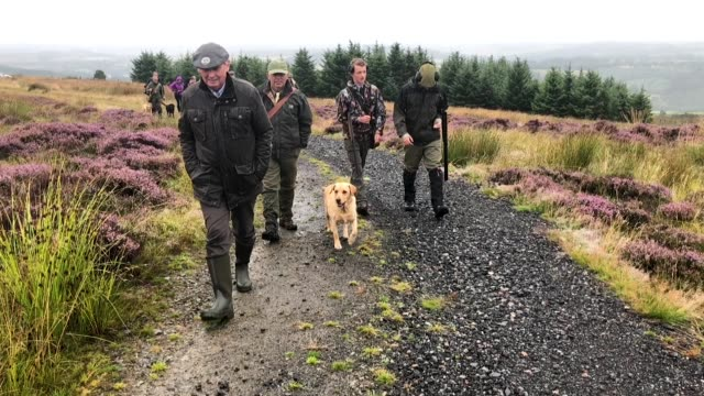 vidéos et rushes de a shooting party set off on first day of the grouse shooting season on forneth moor on august 13 2018 in dunkeld scotland gamekeepers are expecting a... - chasseur