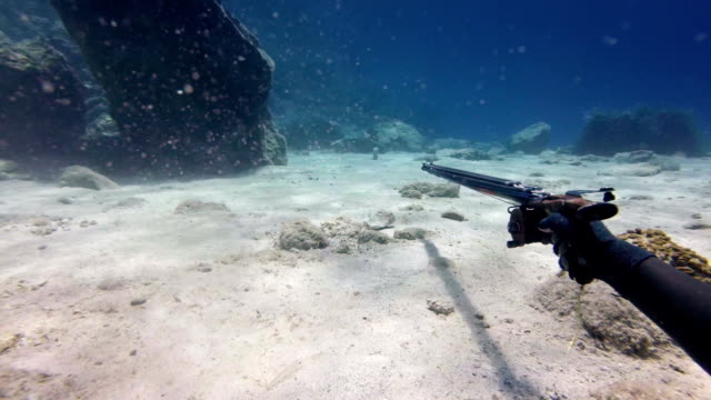 shooting with a speargun underwater - harpoon stock videos and b-roll footage