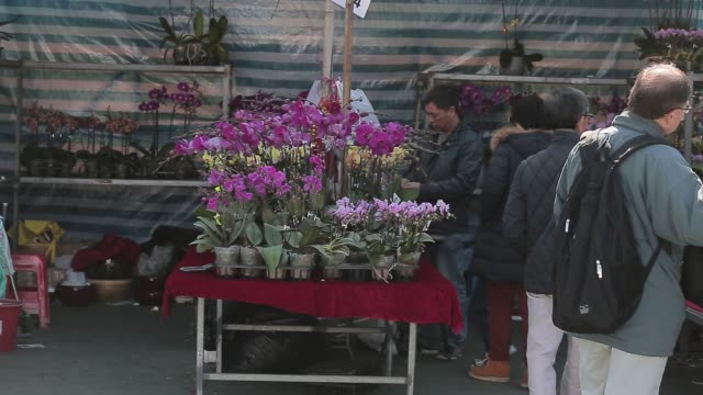 shoppers look at flowers displayed for sale for the lunar new year at a flower market in the mong kok district of hong kong china on sunday feb 7... - mong kok stock videos and b-roll footage