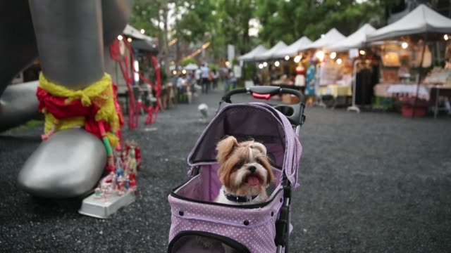 stockvideo's en b-roll-footage met shoppers walk through the chang chui night market in the thonburi district of bangkok thailand on saturday sept 30 a dog sits in a stroller as... - for sale korte frase