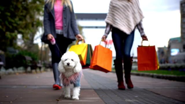 vídeos de stock, filmes e b-roll de dia de compras - pet clothing