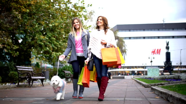 shopping day - dog coat stock videos and b-roll footage