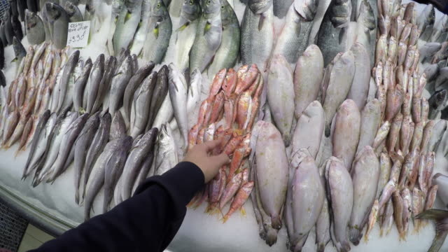 pov: shopping for fresh fish - fish market stock videos and b-roll footage