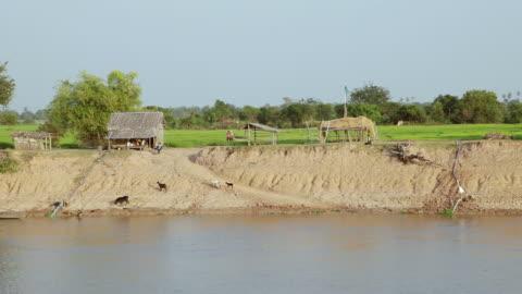 vídeos y material grabado en eventos de stock de ws pov shore of mekong river / saigon, vietnam  - grupo mediano de animales