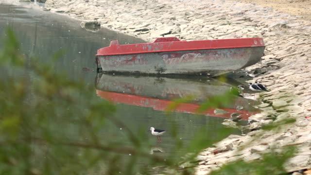 shorebird in water (black necked stilt), near water boat - water bird stock videos & royalty-free footage