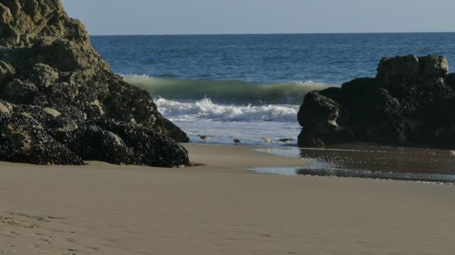 vídeos de stock e filmes b-roll de 4k shorebirds at the surfs edge malibu california - water's edge