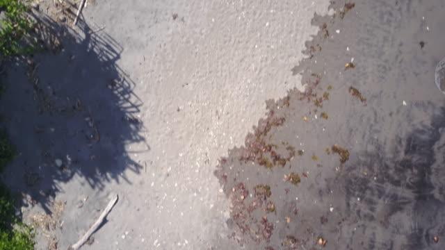 shoreline birds eye view - kiefernwäldchen stock-videos und b-roll-filmmaterial